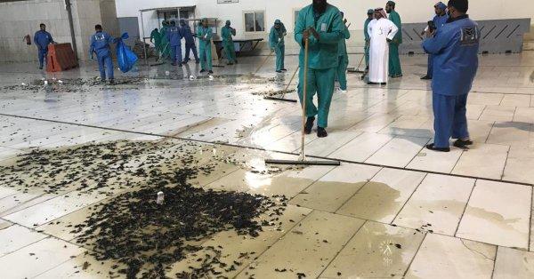 انتشار الحشرات في الحرم المكي.. وسلطات مكة توضح