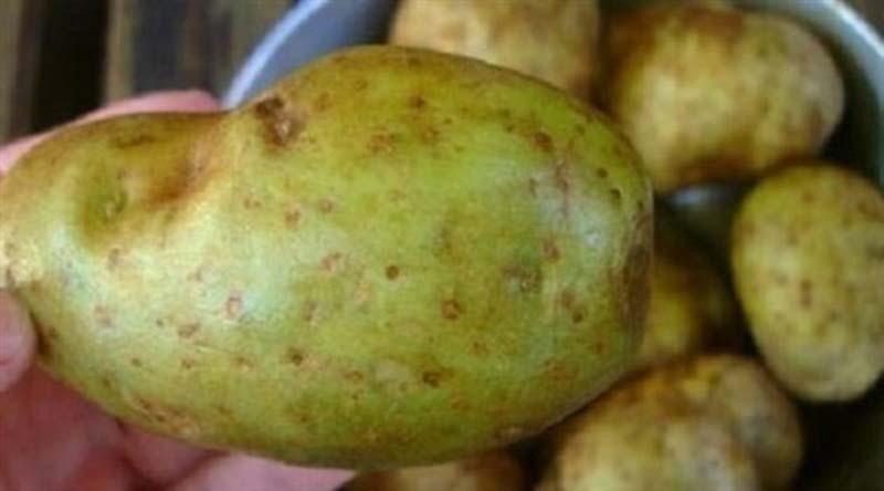 تحذير من تناول البطاطس التي تحتوي على هذه العلامات