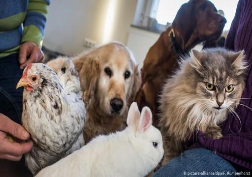 معهد ألماني يكشف عن دور الحيوانات الأليفة في نشر كورونا