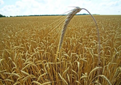 كيف أصبحت الإمارات مصدّرا للقمح؟
