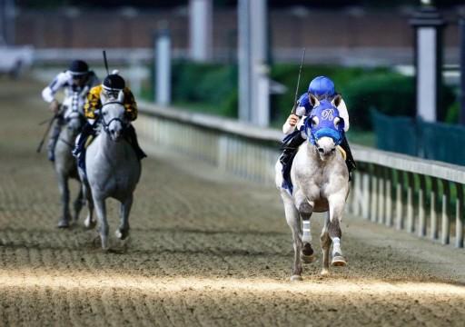 بلجيكا تستضيف المحطة الخامسة من كأس رئيس الدولة للخيول العربية الأصيلة