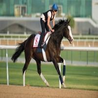 3 خيول تحمل آمال اللقب الإماراتي الـ 11 في «كأس دبي العالمي»