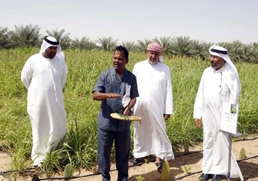 بلدية العين توقف استخدام الآبار أثناء الأمطار