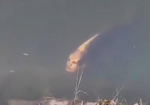 بالفيديو.. سمكة بوجه إنسان تثير جدلا في الصين