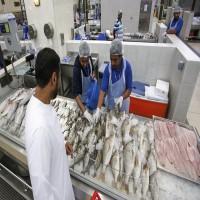 انخفاض أسعار الأسماك في أبوظبي خلال رمضان