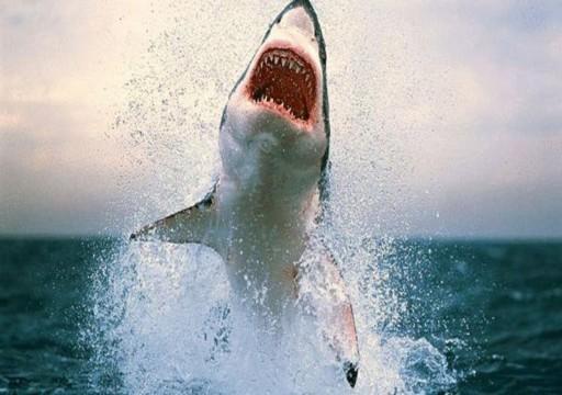 شاهد.. سمكة قرش تهاجم أردنياً في البحر الأحمر