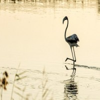 القرم الوطني.. موطن 8 ملايين شجرة وموئل لـ60 نوعاً من الطيور