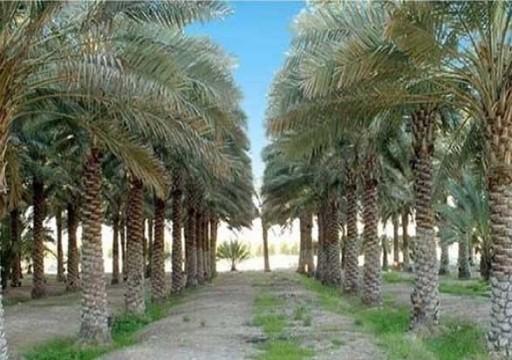 «أدنوك» تزرع 1500 نخلة في جزيرة زركوه بأبوظبي