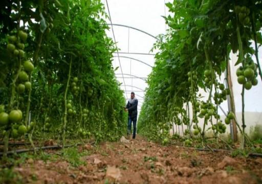 الإحتلال يتراجع عن قرار منع استيراد وتصدير المنتجات الزراعية الفلسطينية
