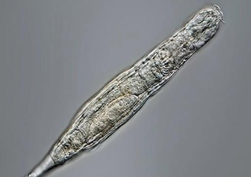بعد 24 ألف عام.. حيوان مجهري متجمد يعود للحياة في سيبيريا