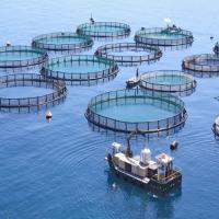 مبادلة تستثمر في مجال قطاع الأحياء المائية بالشراكة مع مجموعة أندرميدا
