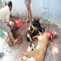 «الصحة»: الذبح المخالف للأضاحي يعرض أصحابه لفيروس مميت