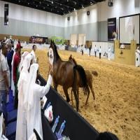 بيع مهرة عربية بسعر 500 ألف درهم في معرض الخيل بدبي