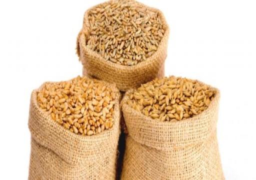 السعودية: شراء 10 %من احتياجات القمح من شركات سعودية بالخارج