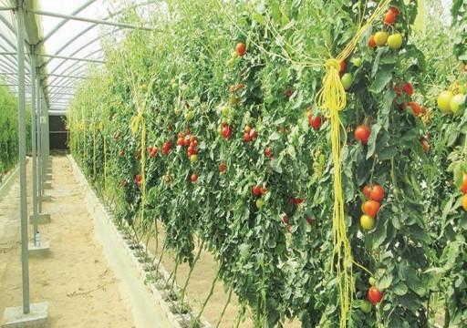 البيئة: الخضراوات المحلية تغطي 20% من احتياجات السوق