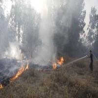 صحيفة: بالونات غزة تحرق ثلاثة آلاف دونم في إسرائيل خلال يوم واحد
