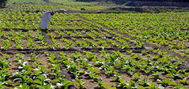 مزارعون يطالبون بزيادة حجم الدعم السنوي لهم