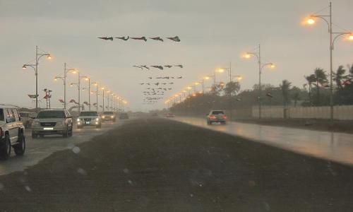 الأمطار تعم مناطق مختلفة من الساحل الشرقي للدولة