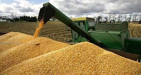 الإمارات تشتري 99 ألف طن من الذرة والشعير من أمريكا