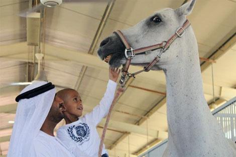 تحقيق أمنية طفل إماراتي مصاب بالسرطان بإهدائه جوادًا عربيًا