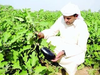 مزارعو رأس الخيمة يشكون غياب دعم الجهات المختصة