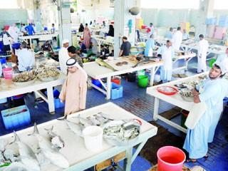 ارتفاع أسعار الأسماك في الفجيرة 70 %