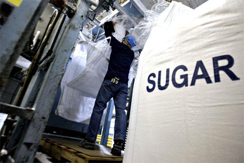 مجلس الوزراء المصري يوافق على بناء مصنع سكر جديد برأس مال إماراتي