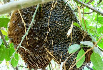 هجمات النحل تعّلق الدراسة في إحدى المدارس بالأردن