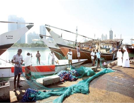 جمعية دبي للصيادين: هناك توفر لمختلف أنواع الأسماك في السوق المحلي