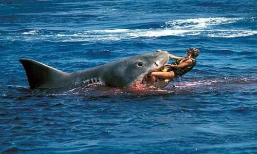 سمكة قرش تقتل سائحاً نمساوياً في جنوب أفريقيا