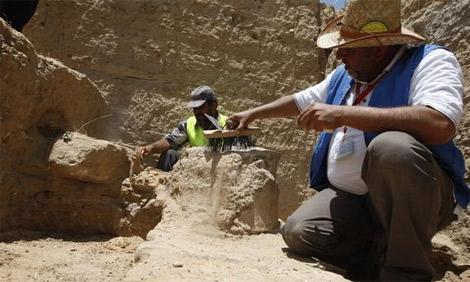 اكتشاف أحفور في أبوظبي تعود إلى ما قبل 8 ملايين عام