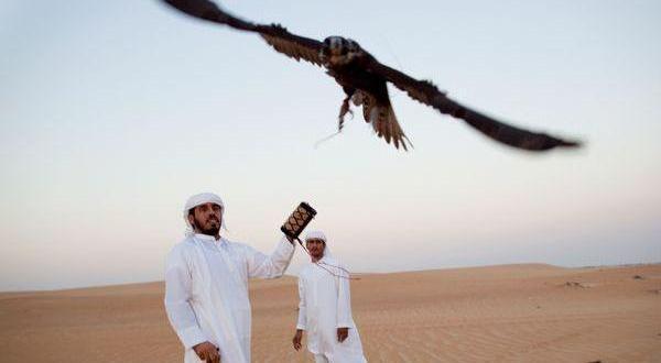 800 من مربي الصقور يشاركون بأكبر مهرجان لها في أبوظبي