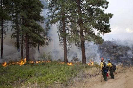 تدمير 200 منزل جرآء أكبر حريق للغابات بولاية واشنطن