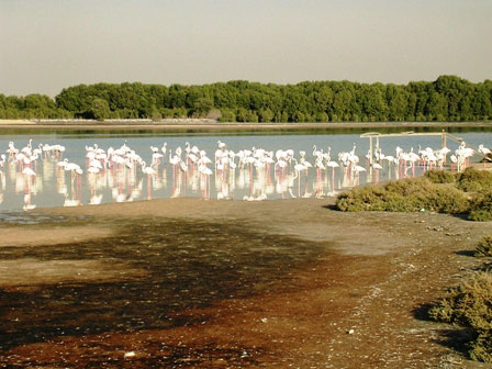 هيئة البيئة تصدق على ضم 17 محمية طبيعية جديدة في أبوظبي