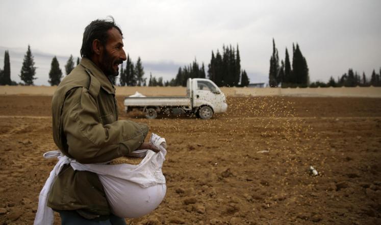 حكومة دمشق لا تتوقع استيراد القمح هذا الموسم